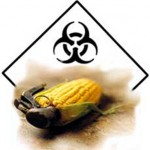 Image from http://foodfreedom.wordpress.com/2010/04/11/nonsanto-a-month-without-monsanto/